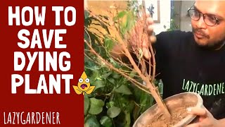 Reviving Dead Plants | How to save a dying plant