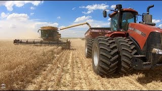 12 Claas Lexion Combines cutting Winter Wheat near Byers Colorado