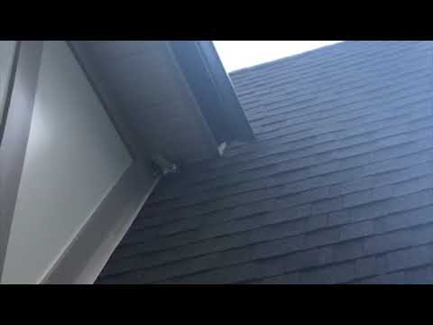 As this homeowner in Freehold, NJ was relaxing out on his porch one evening, he saw something that made his heart stop —bats flying out of his attic!