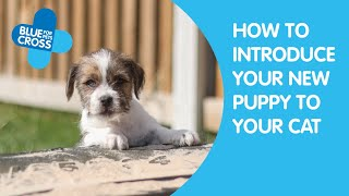 Introducing Your New Puppy To Your Cat   Blue Cross Pet Advice