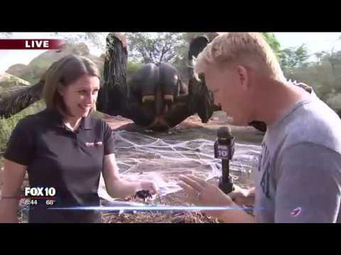Exhibición animatrónica de grandes insectos en el zoológico de Phoenix