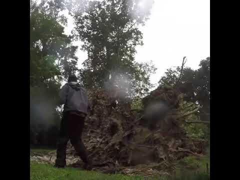 Hurricane Barry Tears Backyard Tree Up by Its Root - 1056345-2