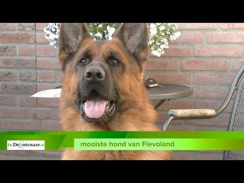 Duitse Herder Fernando uit Swifterbant