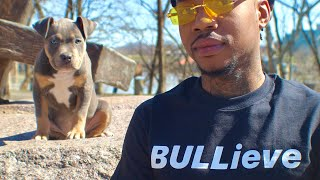 How Much Does A American Bully Cost ?