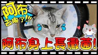 【Bonnie】阿布在哪裡?! - 貓咪身上長黴菌│阿布終於學會握手囉 ! !
