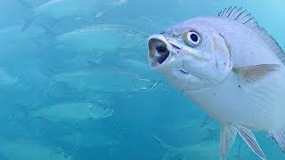 Live Underwater Camera to return Sept 23 (or that week)