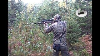 Wild boar hunting in October