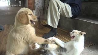 หมาแกล้งแมว
