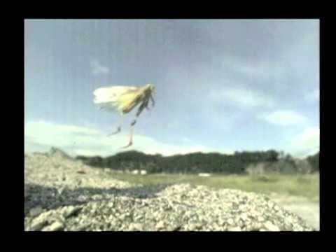 トノサマバッタの飛翔