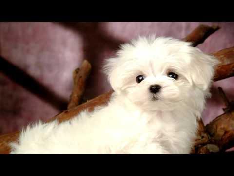Pag-aalis ng mga worm puppy
