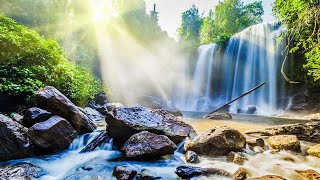 Morning Relaxing Music - Bird Sounds, Water Sounds, Forest Sound, Stress Relief Music, Meditation
