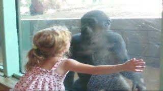 Маленькая девочка и детеныш гориллы