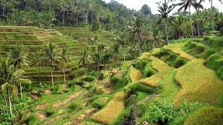 Isla de Bali con In2travel
