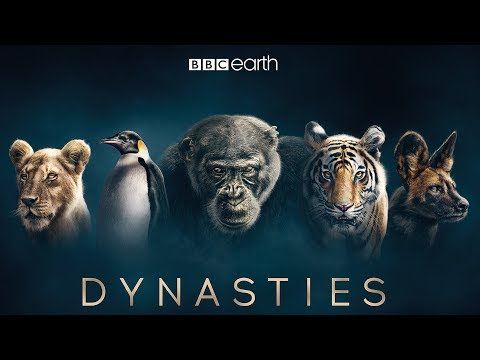 Dynastie: Nový pořad Davida Attenborougha