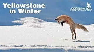 Yellowstone in Winter Photo Tour