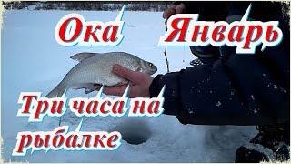 Отчет о рыбалки ока