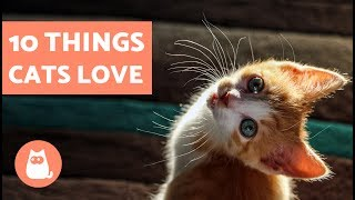 10 Things Cats Love
