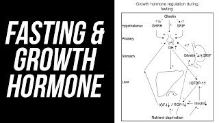 Fasting, Growth Hormone & Autophagy
