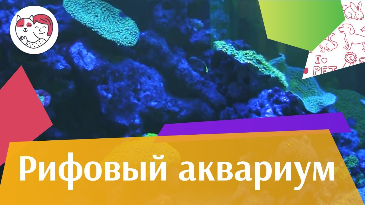 Рифовый аквариум Часть 1 АкваЛого на ilikePet
