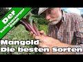 Mangold Anbauen  Die Besten Sorten  Teil 2