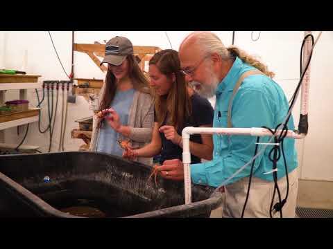 The University of New England - Video tour   StudyCo