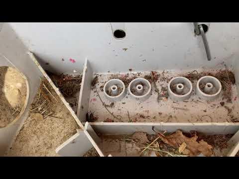 Earwigs Found Inside Bait Station in Matawan, NJ