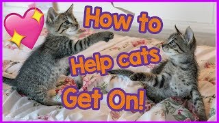 My cats don't get along - How to help your cats get on!