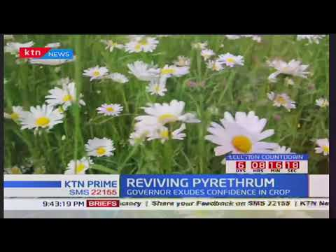 Pyrethrum stakeholders form team to spearhead its economic revival plans
