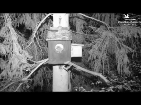 Waldkauz 22.04.17 (Erstes