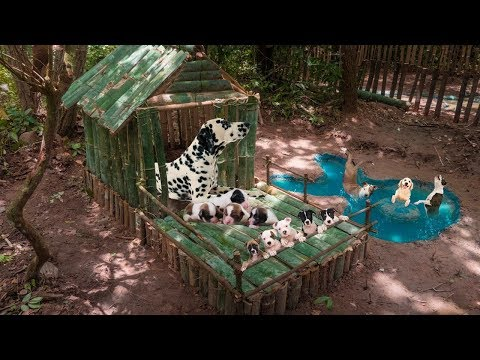 Primitive Technology: Rescues Wild Dogs Building House And Swimming Pool