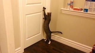 Смотреть онлайн Подборка: Коты открывают двери в домах
