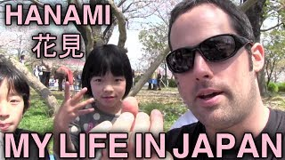 Hanami - Sakura - Cherry Blossoms - My Life in Japan - 1 - English Lesson on Japanese Culture