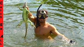 SWIMMING For COLD IGUANAS!