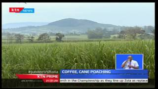 KTN Prime: Government proposes for coffee insurance both in the field and during storage, 14/12/16