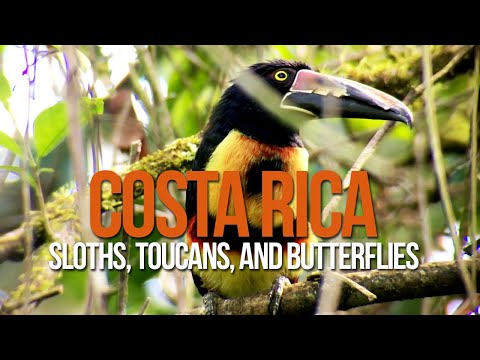 La Fortuna Nature Reserve: Ecocentro Danaus (sloths, toucans, frogs, and more!)