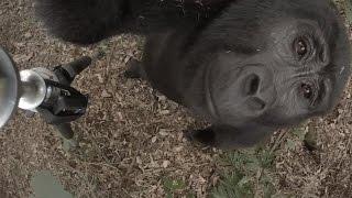 360 Video of Sanctuary Gorilla Forest Camp, Uganda