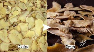 Turmeric Powder Manufacturing Business/Dry Ginger Powder Making Machine youtube video