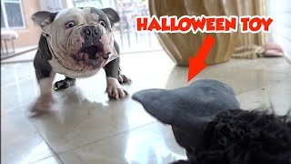PRANKING MY DOG WITH A SCARY HALLOWEEN TOY THAT MOVES! | SO FUNNY! | NICOLE SKYES