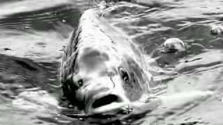 preview picture of video 'EnTeam ribolov 2008 1'