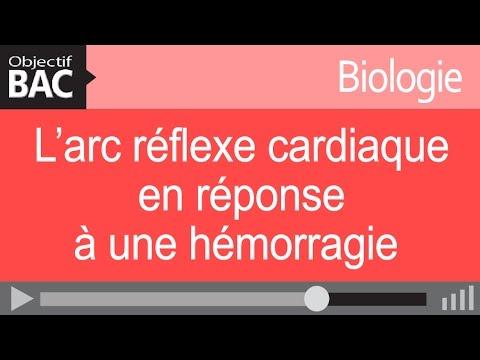 Médicaments pour lhypertension artérielle, faible cardiaque