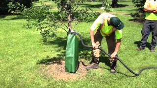 Watering Tips to Survive the Drought