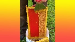 ถ้าสมัยผมเด็กๆ จะออกไปหารังผึ้งตามต้นไม้ เขาจะเรียกการตีผึ้ง คือจะใช้กาบมะพร้ามจุดไฟไล่ตัวผึ้งก่อน แล้วจะตัดเอารังผึ้งลงมารีดน้ำหวานที่หลัง ใครตีผึ้งเก่งแทบจะไม่โดนต่อยเลย แต่วันนี้เป็นคลิปเก็บน้ำผึ้งสดๆจากรังผึ้งตามฟาร์มที่เขาเลี้ยงกัน แต่จะมีอะไรเด็ดๆให้ดูต้องไม่พลาดคลิปนี้นะครับ    ชาวแม่งฮา  ถ้าคุณถูกใจคลิปของเรา ช่วยกดไลค์ กดสับตะไคร้ และกดกระดิ่ง เป็นกำลังใจให้เราด้วยนะครับ  Facebook: http://bit.ly/2t2giga  ▬▬▬▬▬▬▬▬▬▬▬▬▬▬▬▬▬▬▬▬▬▬▬  -If we used your video and you would like it removed, please contact us on the following e-mail address: maeng555contact@gmail.com