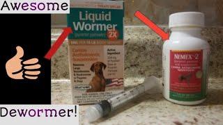How To Deworm Your Litter Of Puppies! 😮🐶🐕🐾 #LiquidDewormer #Nemex2