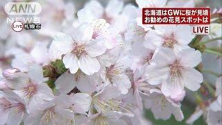 札幌の穴場スポットチシマザクラ今だけ一般公開15/04/28