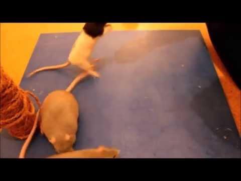 Die Würmer bei den Kindern komarowski