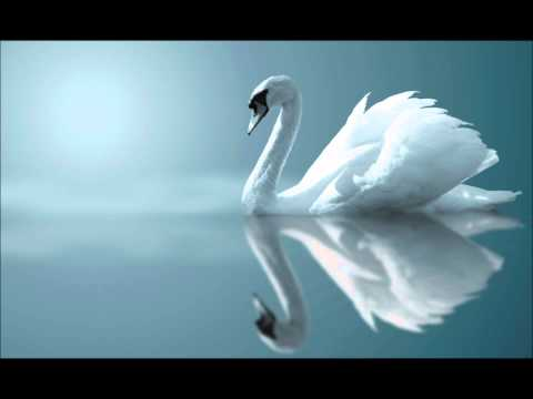Красивая музыка (видео)