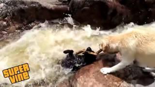 пёс спас пса
