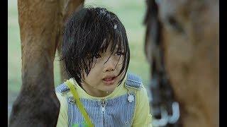 一匹通人性的母马,每天接小主人放学,下雨就用身体替她遮风挡雨