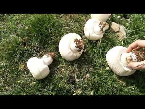 Decocción de las semillas de lino para la diabetes