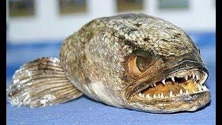 Факты о морепродуктах которые стоит знать каждому. Эксперты раскрывают леденящую кро в ь  правду.
